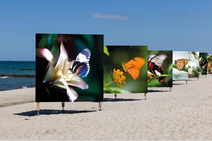 Jan Michael Hosan Prints